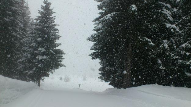 Neige sur les pistes de ski de Fond du plateau de Beauregard