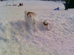 Bonhommes de neiges sur le plateau de Beauregard
