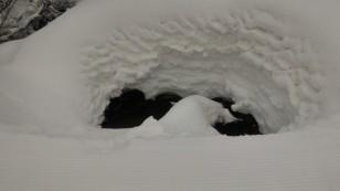 Sous la couche de neige, l'au coule et une vie insoupçonnée poursuit son court.