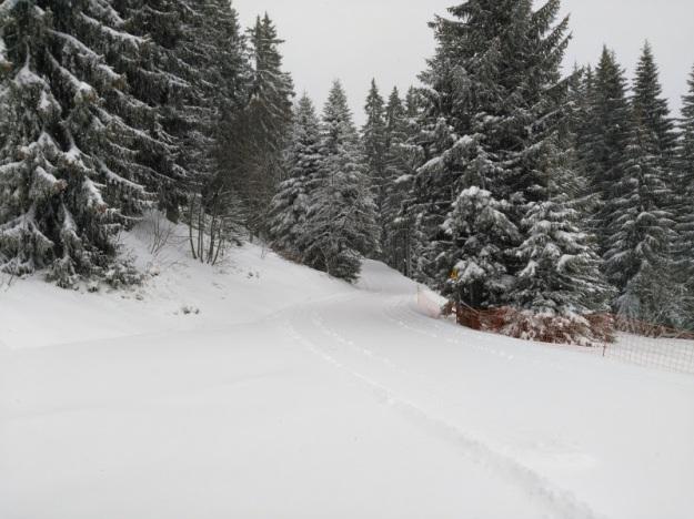 Neige sur les pistes de ski de fond